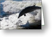 Oceano Greeting Cards - Dolphin jump Greeting Card by Bibi Romer