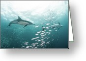 Swimming Photo Greeting Cards - Dolphins Greeting Card by Alexander Safonov