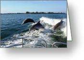 Boca Grande Prints Greeting Cards - Dolphins jumping Greeting Card by Geralyn Palmer
