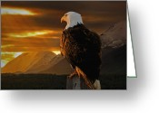 Bald Eagle Digital Art Greeting Cards - Domain Greeting Card by Ron Day