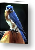 Wildlife Photos Greeting Cards - Dominator Greeting Card by Skip Willits