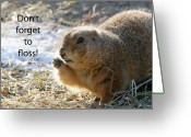 Prairie Dog Greeting Cards - Dont Forget to Floss Greeting Card by Karol  Livote