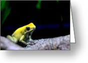 Amphibians Greeting Cards - Dont Kiss Me Greeting Card by JC Findley