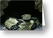 Snakes Greeting Cards - Dont Tread on Me Greeting Card by JC Findley