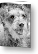 Watch Dog Greeting Cards - Dottie Brown Eyes 2 Greeting Card by Karen Lewis