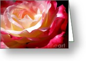 Red And Tea Greeting Cards - Double Delight Rose Greeting Card by Kaye Menner