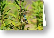 Mosquito Greeting Cards - Double Dragon Greeting Card by Al Powell Photography USA