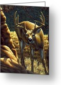 Deer Greeting Cards - Double Take Greeting Card by Crista Forest