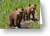Black Bear Cubs Greeting Cards - Double Trouble Greeting Card by Bruce J Robinson