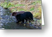 Black Bear Cubs Greeting Cards - Double Trouble Greeting Card by Mike  Dawson
