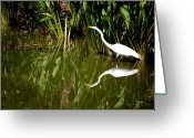 Florida Swamp Greeting Cards - Double White Greeting Card by Emily Stauring