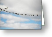Standing Out From The Crowd Greeting Cards - Doves In Line On Power Cord Greeting Card by Elin Enger