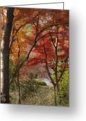 Maple Photographs Greeting Cards - Down Yonder Path Greeting Card by Greg Kopriva