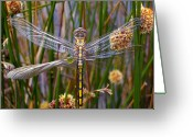Green Water Greeting Cards - Dragonfly Greeting Card by Alison Lee  Cousland