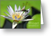 Wild Rivers Greeting Cards - Dragonfly and the Water Lily Greeting Card by Sabrina L Ryan