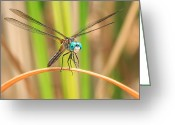 Bug Greeting Cards - Dragonfly Greeting Card by Everet Regal