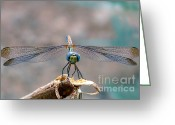 Arabia Greeting Cards - Dragonfly Headshot Greeting Card by Graham Taylor