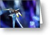 Transformative Art Greeting Cards - Dragonfly in the Blue Greeting Card by Lisa Redfern