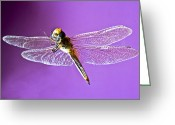 Mid-span Greeting Cards - Dragonfly Greeting Card by Kantilal Patel