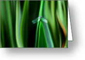 Transformative Art Greeting Cards - Dragonfly Meditation Greeting Card by Lisa Redfern