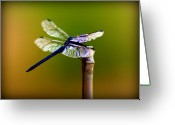 Dragonfly Greeting Cards - DragonFly Greeting Card by Susie Weaver