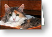 Calico Cat Greeting Cards - Drawer Kitty Greeting Card by Karen Slagle