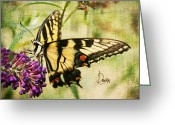 Swallow Tail Butterfly Greeting Cards - Dream Greeting Card by Darren Fisher