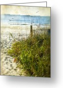 Sea Oats Digital Art Greeting Cards - Dream on the Beach Greeting Card by Mary Timman