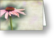 Cone Flower Greeting Cards - Dream Greeting Card by Rebecca Cozart