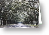 Live Oak Trees Greeting Cards - Dream World Greeting Card by Carol Groenen
