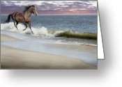 Seafoam Greeting Cards - Dreamer On The Beach Greeting Card by Barbara Hymer