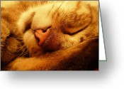 Zsuzsa Balla Greeting Cards - Dreaming Greeting Card by Zsuzsa Balla