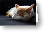 Cat Eyes Greeting Cards - Dreamland Greeting Card by Peter Moorman