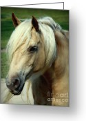 Wild Horses Greeting Cards - Dreams of Honey Greeting Card by Karen Wiles