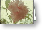 Pink Flower Branch Greeting Cards - Dreams of You - Layered Hibiscus Greeting Card by Georgia Fowler