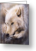 Studio Painting Greeting Cards - Dreamscape - Wolf Greeting Card by Sandi Baker