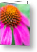 Dreamy Flower Greeting Cards - Dreamy Abstract Coneflower  Greeting Card by Susan Stone