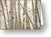 Light Greeting Cards Greeting Cards - Dreamy Aspen Woodland Greeting Card by Andrea Hazel Ihlefeld