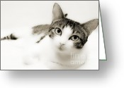 Short Hair Greeting Cards - Dreamy Cat 2 Greeting Card by Andee Photography