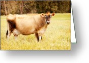 Cows Framed Prints Greeting Cards - Dreamy Jersey Cow Greeting Card by Michelle Wrighton