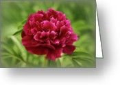 Indiana Flowers Greeting Cards - Dreamy Peony Greeting Card by Sandy Keeton
