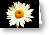Light And Dark  Greeting Cards - Dreamy Greeting Card by Susan Moore