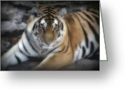 Wildlife Pyrography Greeting Cards - Dreamy Tiger Greeting Card by Sandy Keeton
