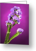 Museum Print Greeting Cards - Dreamy Wild FLower Greeting Card by M K  Miller