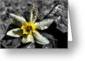 Selective Color Greeting Cards - Drenched in Light Greeting Card by Karen M Scovill