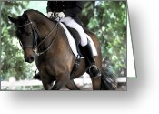 Dressage Photo Greeting Cards - Dressage Beauty Greeting Card by Terry Kirkland Cook