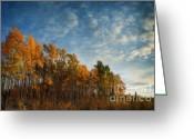 Colors Greeting Cards - Dressed In Autumn Colors Greeting Card by Priska Wettstein