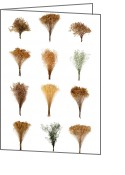 Herb Greeting Cards - Dried Flowers Collection Greeting Card by Olivier Le Queinec