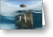 Walruses Greeting Cards - Drifting Pack Ice Enables Walrus Greeting Card by Paul Nicklen