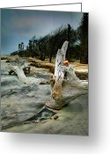 Wood Greeting Cards Framed Prints Greeting Cards - Driftwood and Beach Greeting Card by Steven Ainsworth